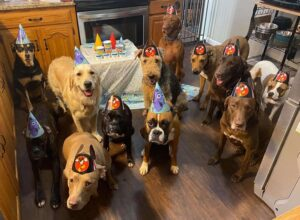 Well-Behaved Dogs Pose for the Best Birthday Party Photos