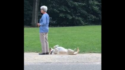 Pup Throws Adorable Tantrum to Stay Longer at the Park